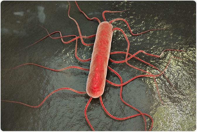 3D illustration of bacterium Listeria monocytogenes. Image Credit: Kateryna Kon / Shutterstock