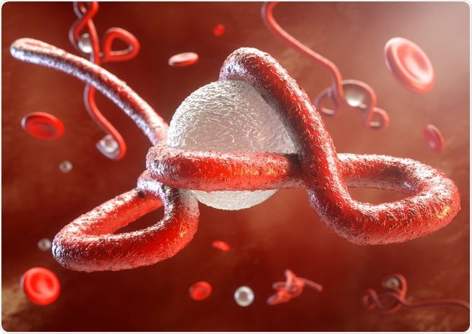 Ebola virus attacks the illustration of the immune system: Image Credit: Crevis / Shutterstock