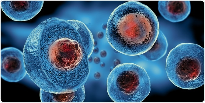 Stem cells - 3d illustration. Image Credit: Giovanni Cancemi / Shutterstock