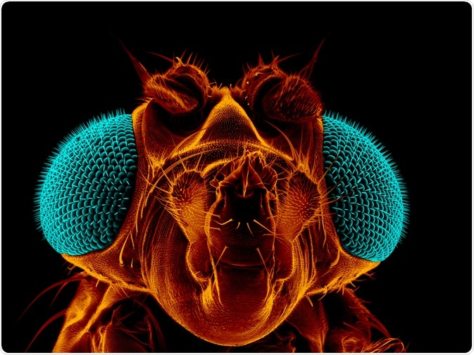 Drosophila image - by Heiti Paves
