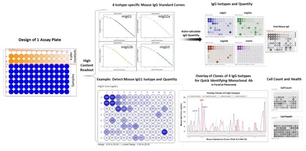 Analysis of High-content Readouts from Hybridoma Samples using Mouse IgG Type and Titer Kit. A single microtiter plate was designed with in-plate 4-plex standards for the top two rows and with hybridoma cell/supernatant samples in the bottom six rows. After data acquisition into the assay template, the analysis algorithm automatically generates four isotype-specific standard curves and IgG concentration is quickly calculated for each sample. The analysis software also provides the IgG isotyping and clone purity information in an overlay line graph in the Panorama function of ForeCyt. Cell count and health/viability is displayed in heat maps or in a data grid.