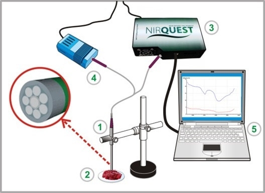 Setup for NIR measurements. (1) NIR probe R (1 + 7) from art photonics GmbH, (2) tissue slice in petri dish, (3) NIRQuest spectrometer, (4) halogen lamp, and (5) PC with software for spectra collection