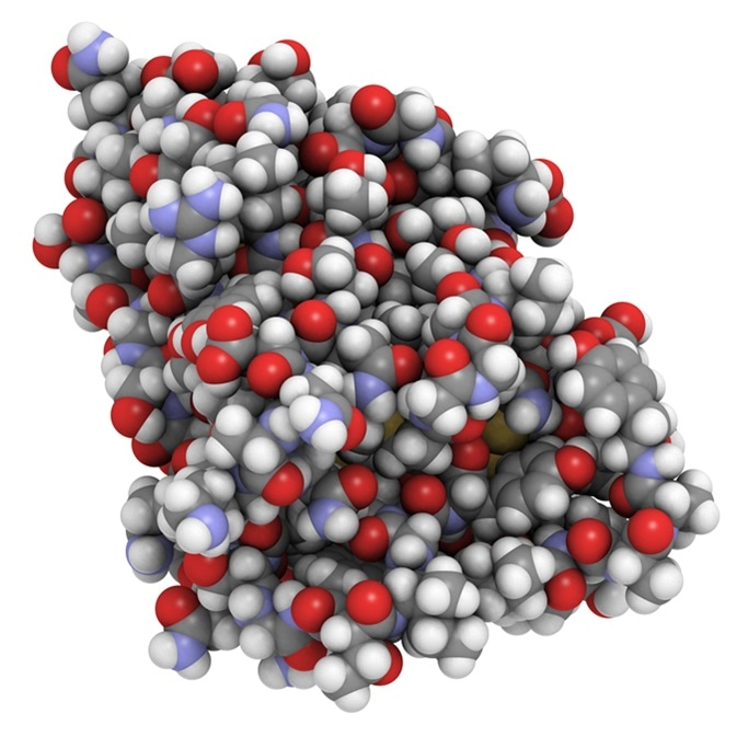 Nanobody protein therapeutic molecule. Nanobodies are small antibodies found in camels, dromedaries and llamas. All-atom representation, atoms are represented as conventionally colored spheres. Image Credit: molekuul_be / Shutterstock
