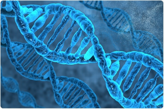 DNA Strands. Image Credit: Vitstudio / Shutterstock