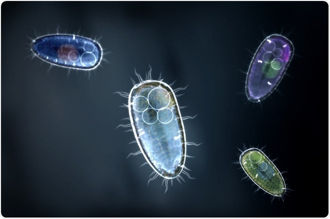 Protozoons / unicellular organisms - Image Credit: Christoph Burgstedt / Shutterstock