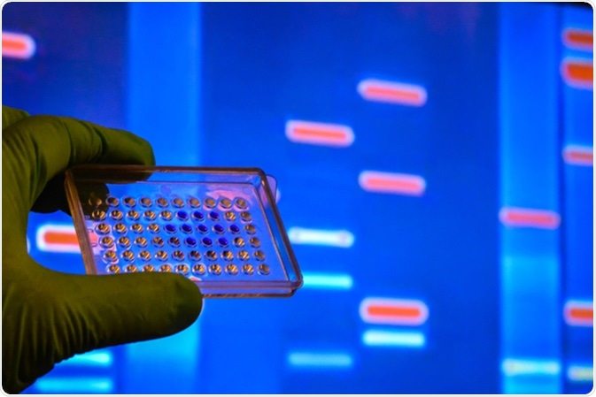 DNA testing in a scientific laboratory. Genome research using modern biotechnology methods. Image Credit: Sergei Drozd / Shutterstock