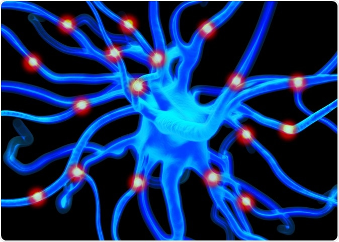 Neuron or nerve cells which form part of the nervous system which process and transmit information by electrical and chemical signalling. Image Credit: royaltystockphoto.com / Shutterstock