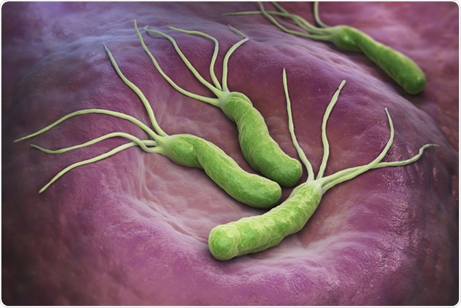 Helicobacter Pylori is a Gram-negative, microaerophilic bacterium found in the stomach. 3D illustration. 3D rendering. Image Credit: Tatiana Shepeleva / Shutterstock