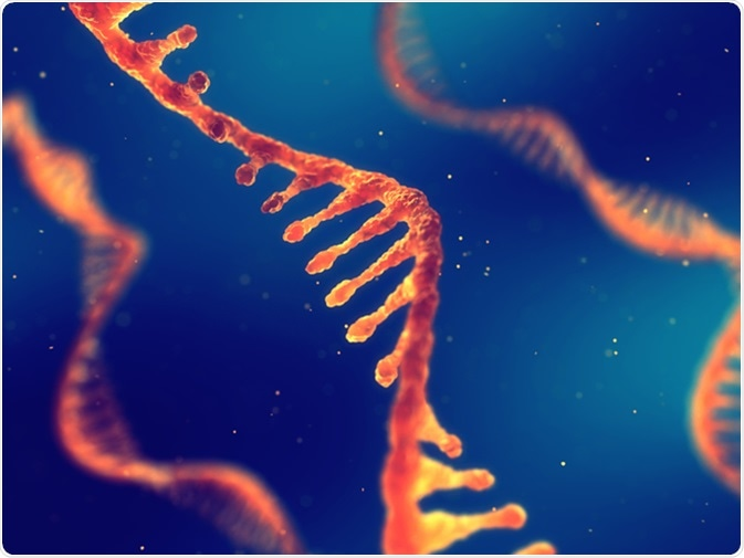 Single strand ribonucleic acid, RNA research and therapy, 3d illustration. Image Credit: Nobeastsofierce / Shutterstock