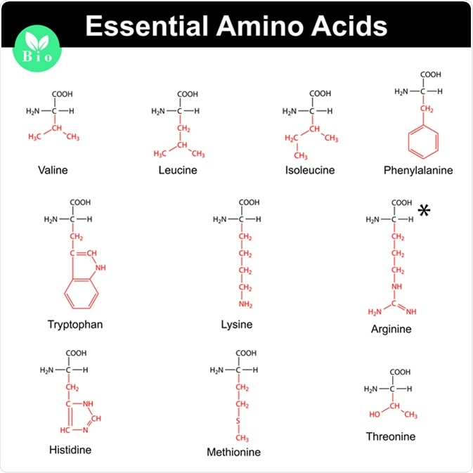 Main essential amino acids with marked radicals, chemical structural formulas. Image Credit: Chromatos / Shutterstock
