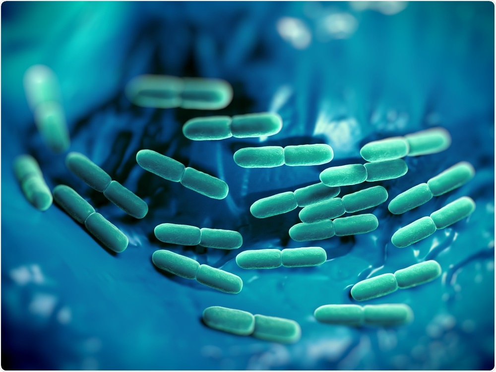 C. difficile in the human gut