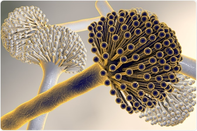 Digital illustration of fungi Aspergillus niger, black mold, which produce aflatoxins, cause pulmonary infection aspergillosis. Image Credit: Kateryna Kon / Shutterstock
