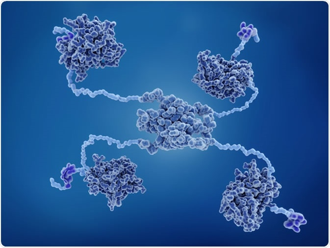 Sensing Oxidative Stress The Ros P53 Pathway
