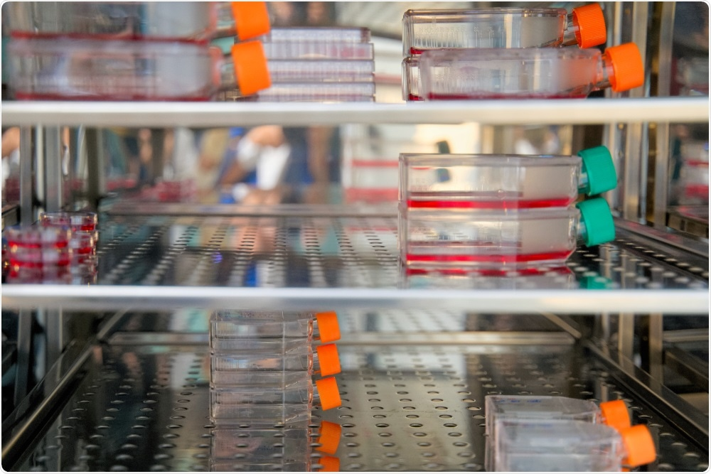 Mycplasma detection - cells in culture in incubator