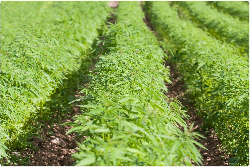 Don't Believe the Hemp: UHPLC Analysis of Hemp Seed Oils