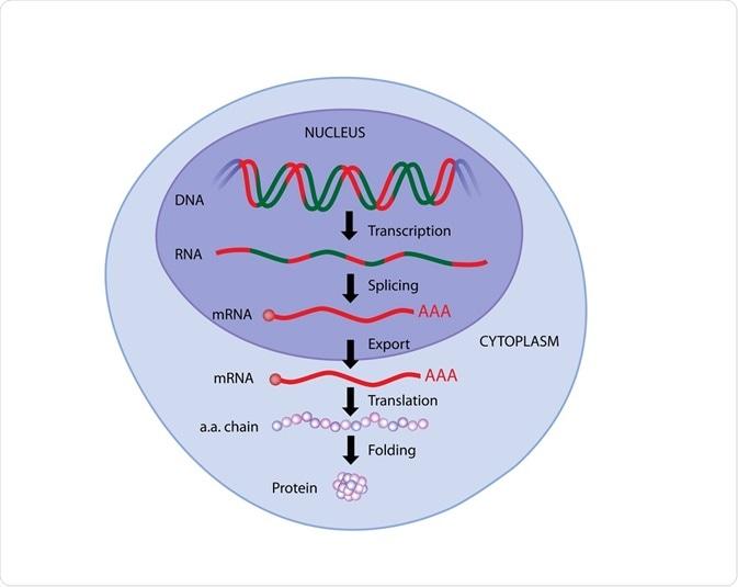 Image result for gene expression