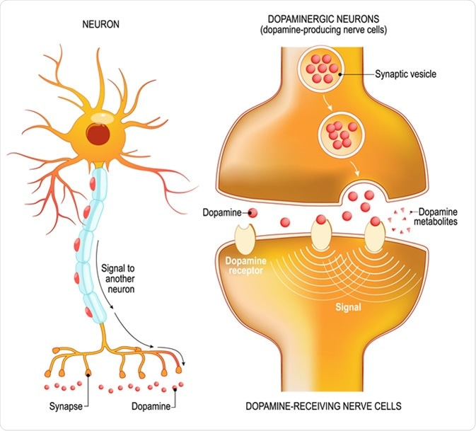 GABA Activation and Dopamine Suppression