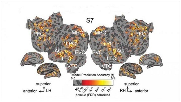 Nearly identical brain activity is evoked from processing