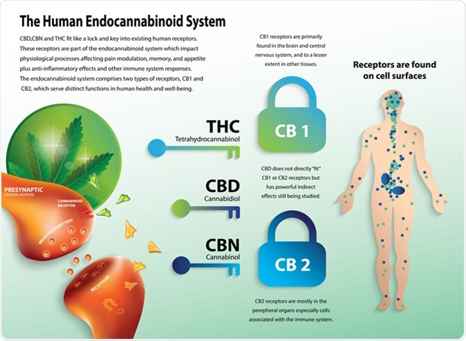 Crystal Structure of the Human Cannabinoid Receptor CB2