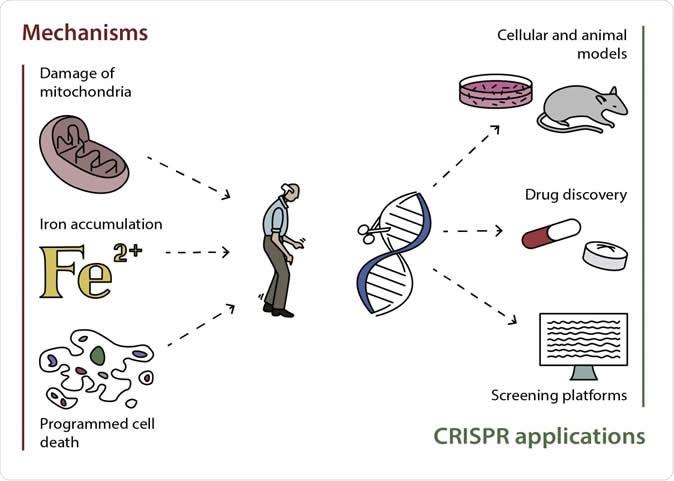 Possible mechanisms of development of Parkinson