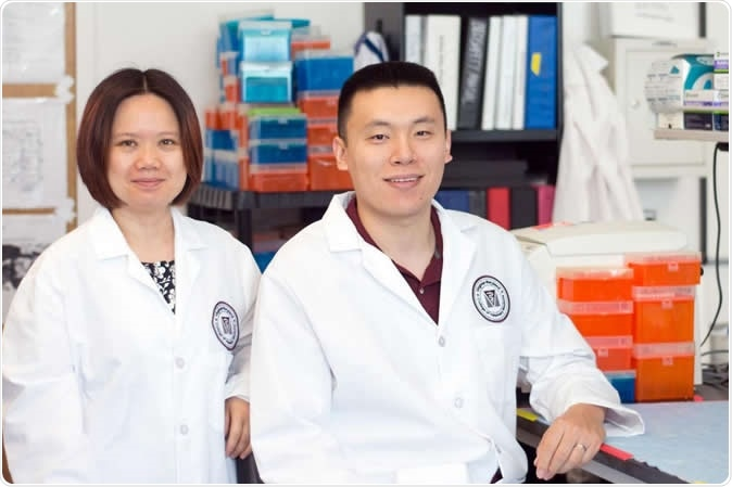 Lead authors Xin M. Luo, associate professor of immunology in the Department of Biomedical Sciences and Pathobiology, and Qinghui Mu, formerly a postdoctoral fellow in the department.