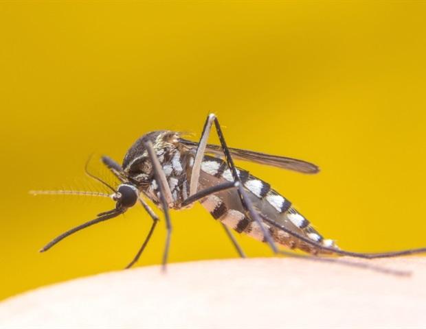 Werden Mücken Vom Licht Angezogen