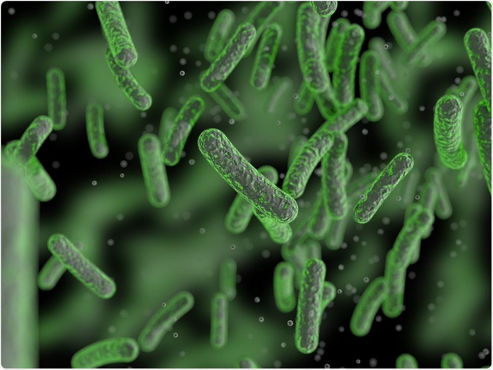 Bacteria in the gut microbiome