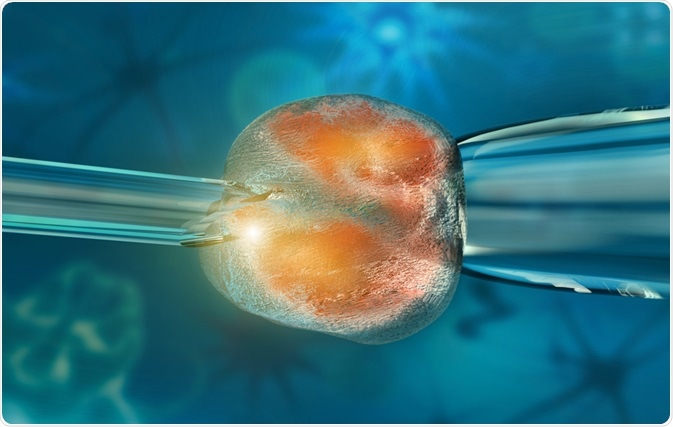 Illustration of a stem cell being cloned - by Giovanni Cancemi on Shutterstock