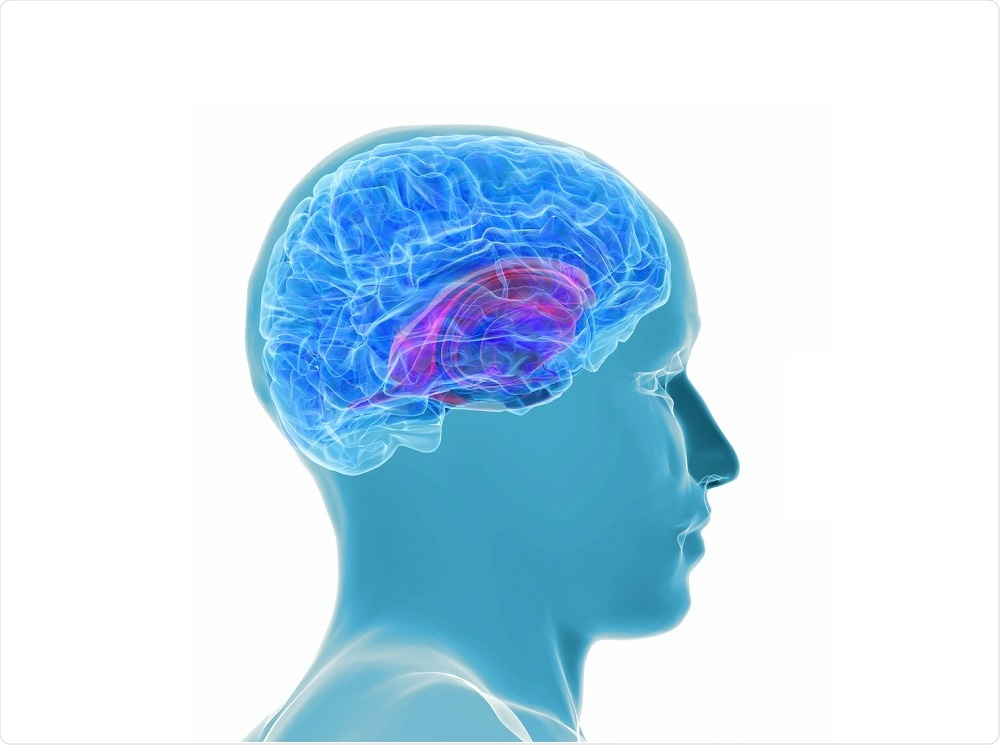 Illustration of a healthy human brain - by goa novi
