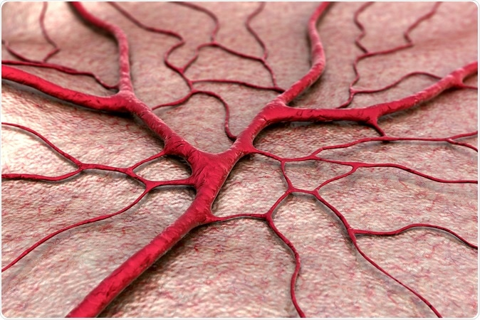 Capillary, blood vessel illustration. Image Credit: UGREEN 3S / Shutterstock