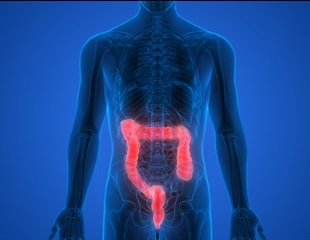 What Does the Large Intestine Do?