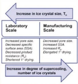 Depiction of the effect of ice crystal size on the freeze- drying process performance.