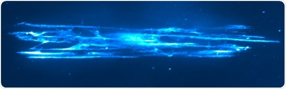 3D cell culture scaffolds prove to be invaluable tool for myelination research