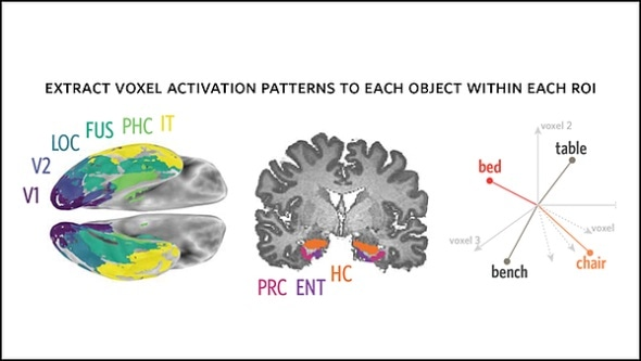 Recognizing and drawing an object engage the brain in similar ways