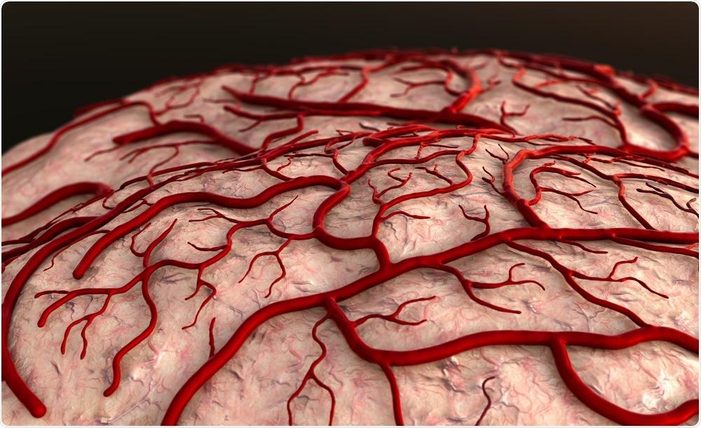 Blood vessels in brain