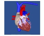 SCHILLER offers free Epicardio heart simulator trial