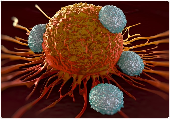 T-cells attacking cancer cell illustration. Image Credit: Shutterstock