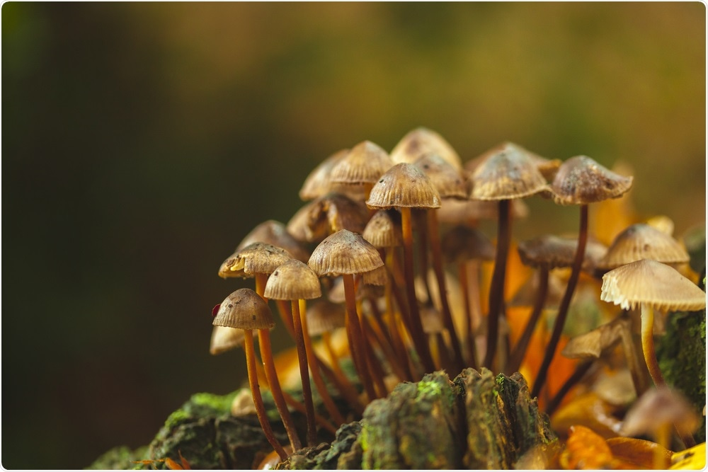 Mushrooms may protect against mild cognitive impairment linked to old age