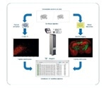 Using MALDI Imaging to Identify Peptides from Tissue Samples