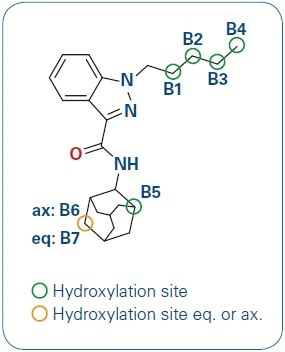 AKB-48 and its hydroxylation sites.