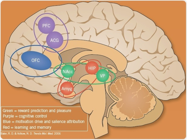 Brain Circuits Associated with Addiction