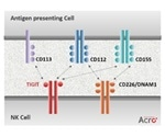 T cell Immunoreceptor with lg and ITIM Domains Signaling Axis