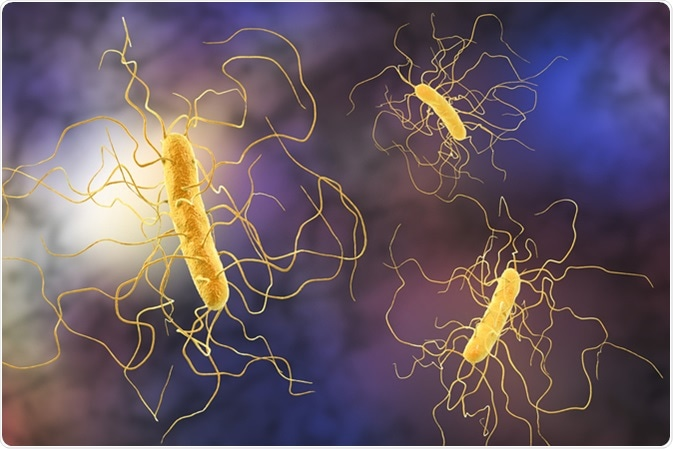 Clostridium difficile bacteria, 3D illustration. Credit: Kateryna Kon / Shutterstock