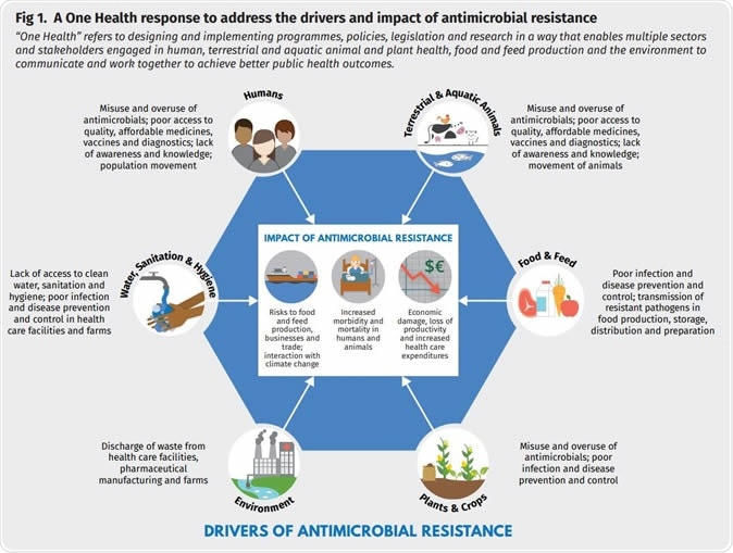 A One Health response to address the drivers and impact of antimicrobial resistance