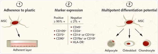 Summary of the ISCT criteria for identifying MSCs for research purposes. (1) MSCs must be plastic-adherent under standard culture conditions. (2) MSCs must express the surface antigens CD105, CD73, and CD90. A lack of expression of hematopoietic antigens (CD45, CD34, CD14/CD11b, CD79a/CD19, HLA-DR) is recommended, along with a minimum purity of ≥95% for CD105, CD73, and CD90 positive cells and ≤2% expression of hematopoietic antigens. (3) MSCs must be shown to be multipotent and be able to give rise to adipocytes, osteoblasts, and chondrocytes under the standard in vitro tissue culture-differentiating conditions.