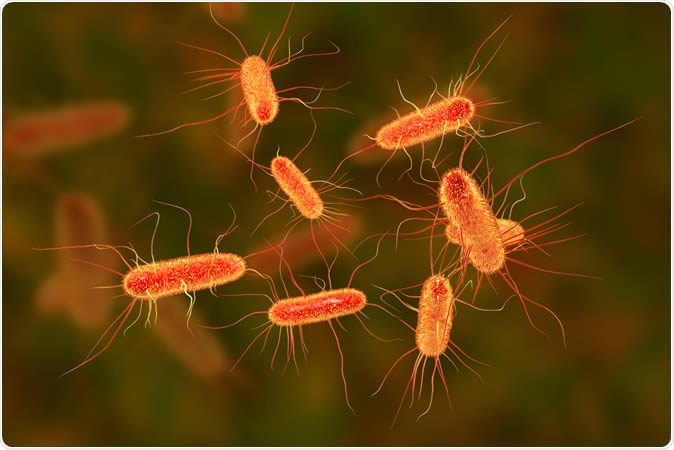 Escherichia coli bacterium, E.coli, gram-negative rod-shaped bacteria, part of intestinal normal flora and causative agent of diarrhea and inflammations of different location, 3D illustration - Illustration. Image Credit: Kateryna Kon / Shutterstock