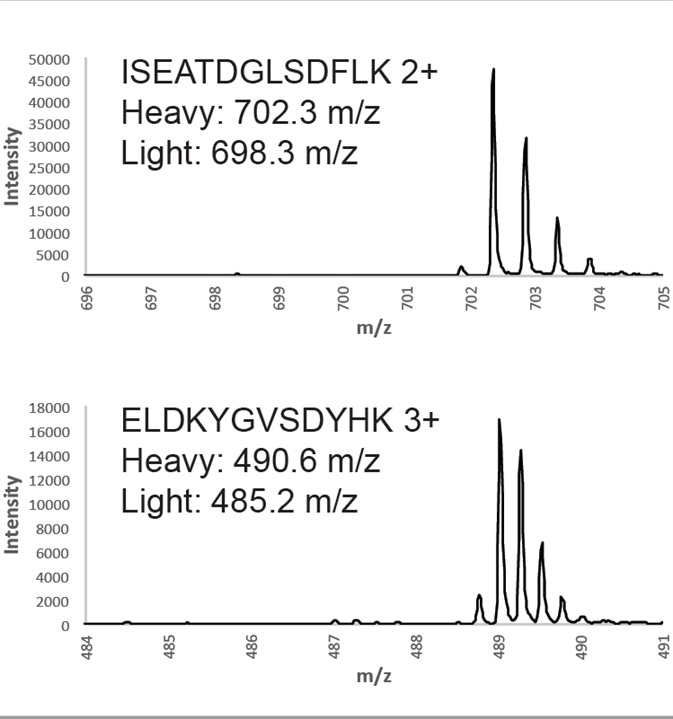 Verification of isotopic incorporation. Analysis of QPrEST tryptic digests using ESI-MS shows that no peaks corresponding to unlabeled peptides can be detected.