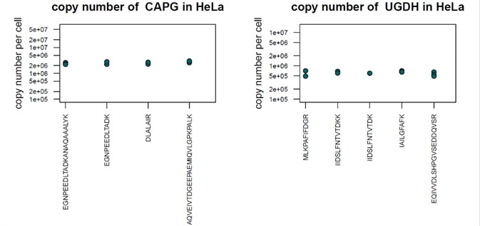 Absolute quantification of two human proteins using QPrEST standards. The copy numbers of CAPG and UGDH were determined in HeLa cells.