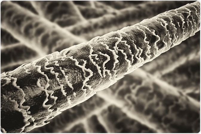 Human hair under microscope illustration. Image Credit: Kateryna Kon / Shutterstock