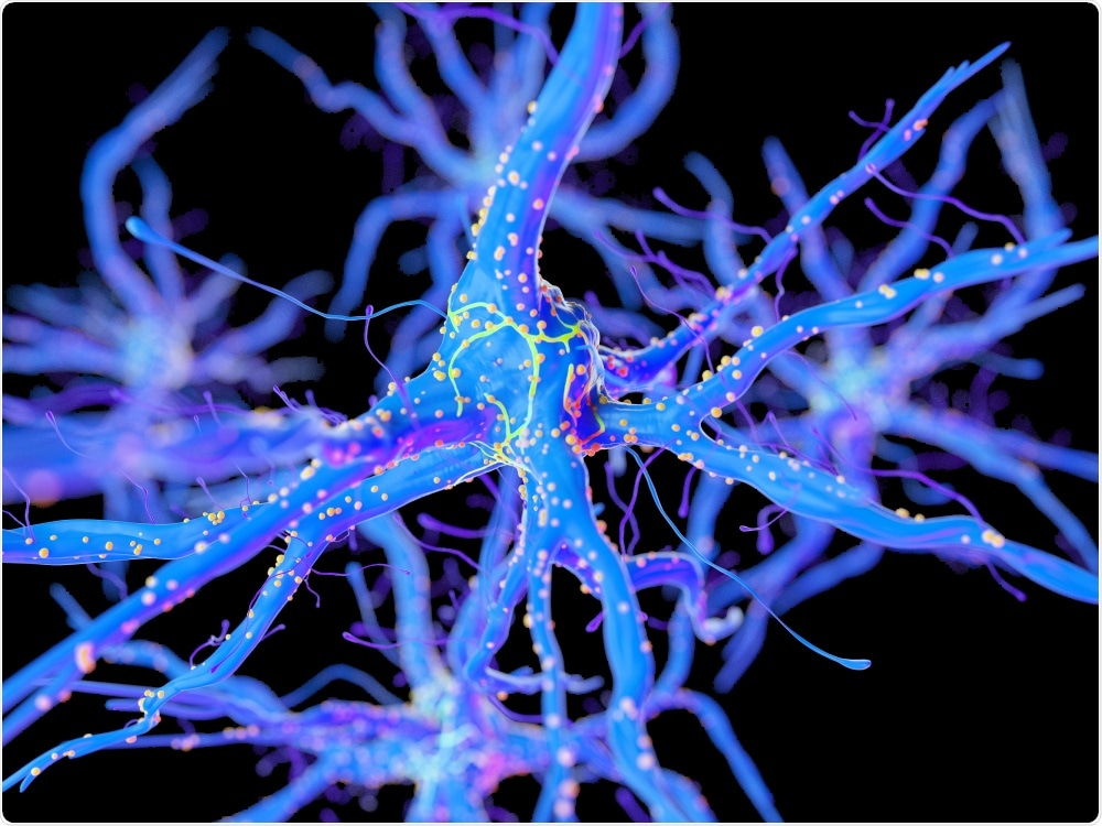 The researchers focused on short-term memory